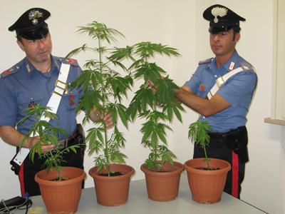 Coltivava cannabis, arrestato carpentiere a Ravanusa