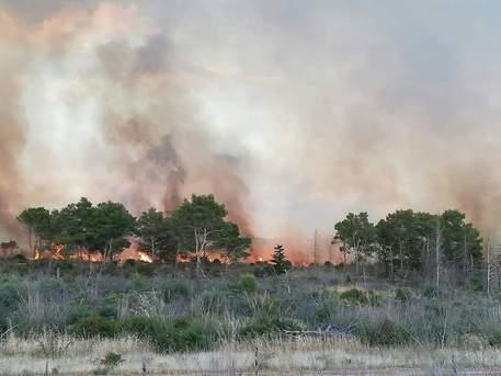 Cento ettari di bosco distrutti da un incendio a Menfi