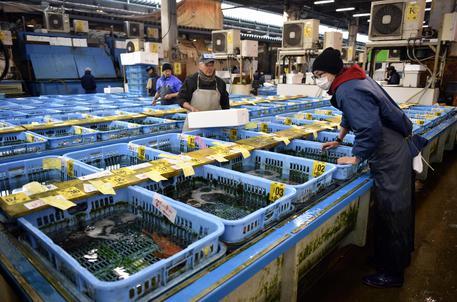 Il mercato del pesce di Tokyo chiude i battenti dopo 83 anni