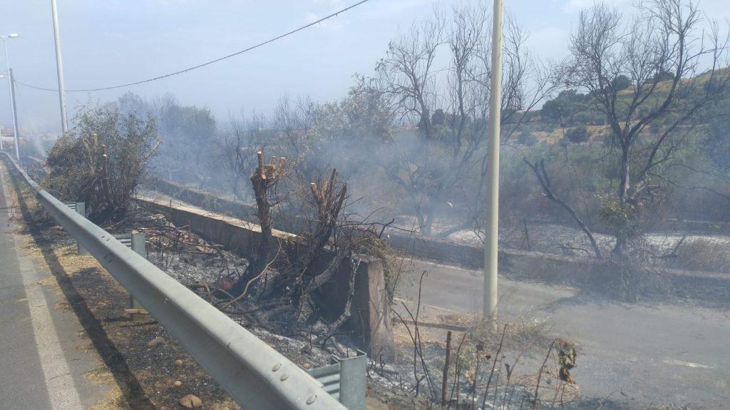 Alberi in fiamme nel Catanese, 50 interventi dei pompieri