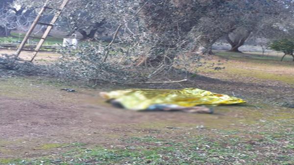 Cade da un albero mentre taglia i rami, un morto nel Cosentino