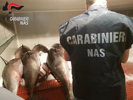 Maxi sequestro di tonno rosso a Catania: ritirati 2200 chili di prodotto
