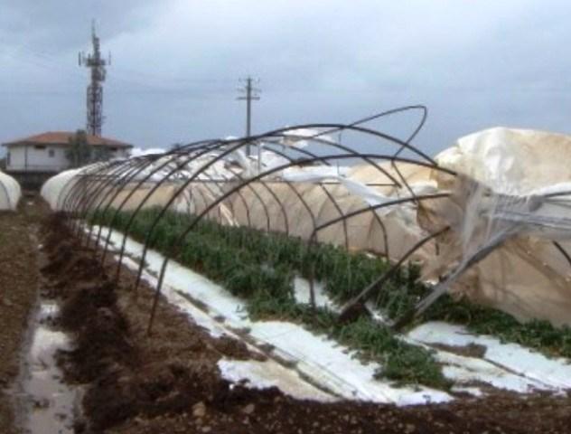 "Gennuso: ""Agricoltura a pezzi a Pachino, c'è pure un'emergenza sociale"""