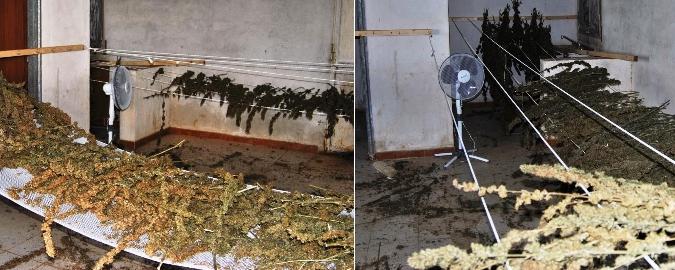 Niscemi, imprenditore sorpreso con 29 chili di marijuana