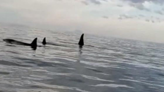 Avvistate tre orche nello Stretto di Messina, forse quelle di Genova