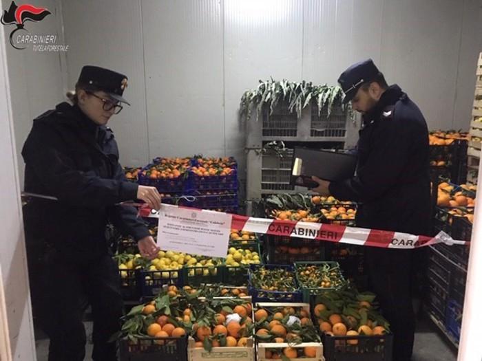 Prodotti non tracciati, sequestro di 4 tonnellate di agrumi e ortaggi nel Cosentino
