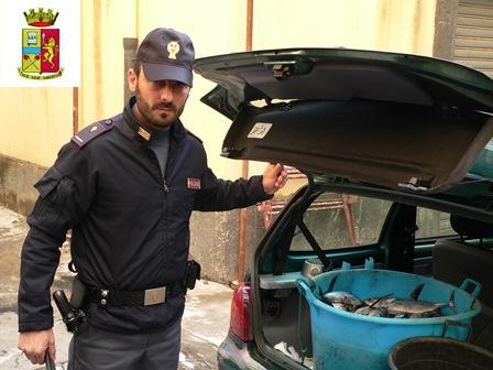 Catania, trovati con 100 chili di pesce spada sottomisura: multa