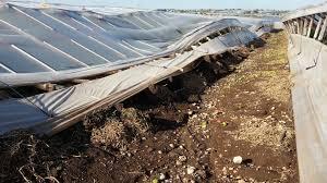 I danni all'agricoltura per il maltempo a Pachino, in arrivo 2 milioni dalla Regione