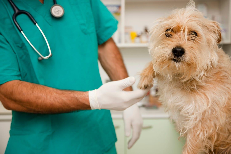 Pachino, denunciato un veterinario per maltrattamento di animali