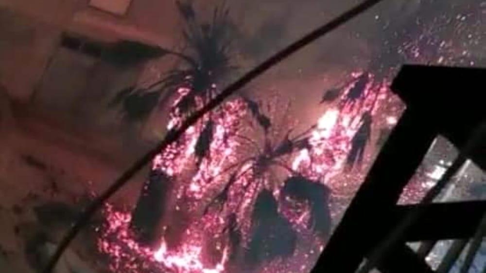Bruciate tre palme in piazza Crispi a Naro: fuoco doloso