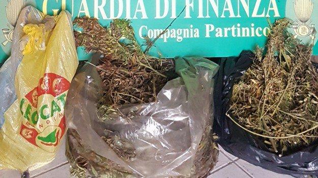 Scoperta una piantagione di marijuana, 3 arresti della Finanza a Partinico
