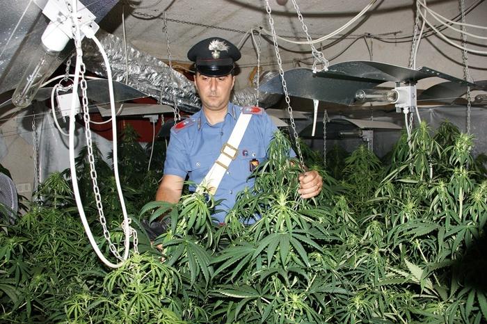 Trovate 253 piante di marijuana in una villa di Partinico: un arresto