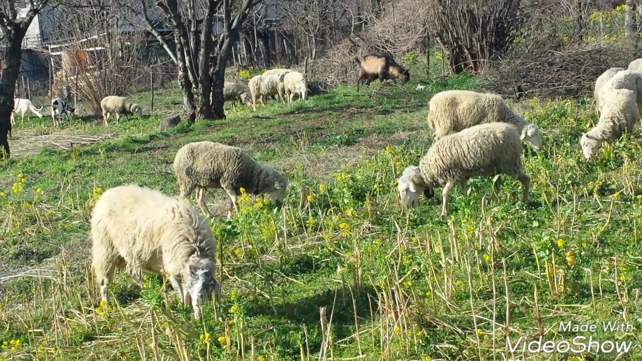 Lasciavano il Comune per fare pascolare le pecore: 2 denunciati a Valguarnera