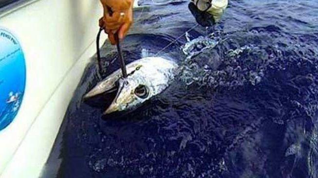 Siracusa, chiusa la pesca sportiva al tonno rosso per il triennio 2017-2020