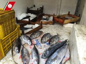 Riposto, la Capitaneria sequestra 120 chili di pesce in pessim stato di conservazione