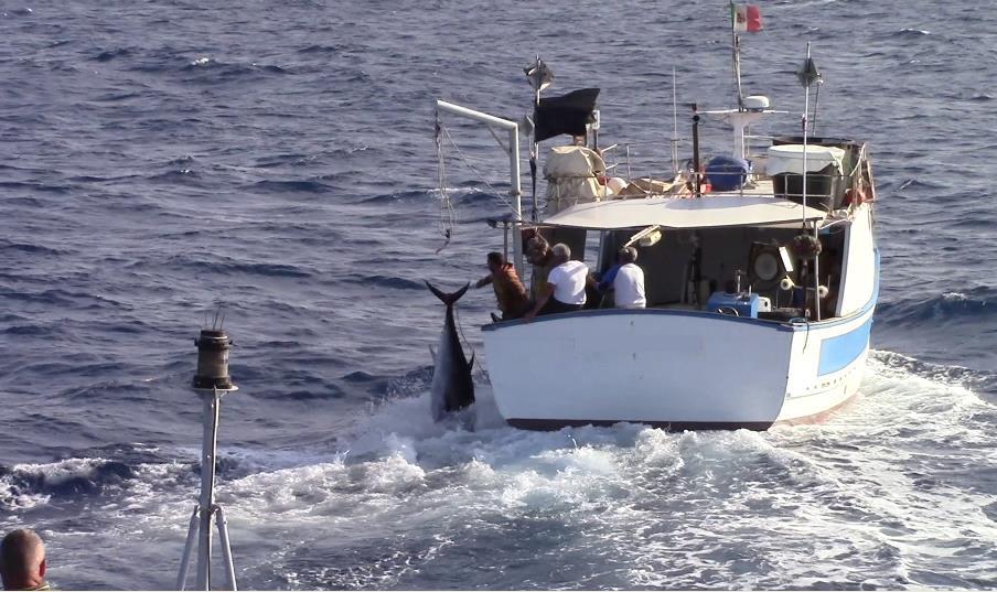Isola delle Femmine, peschereccio inseguito dalla Finanza getta in mare 13 tonni
