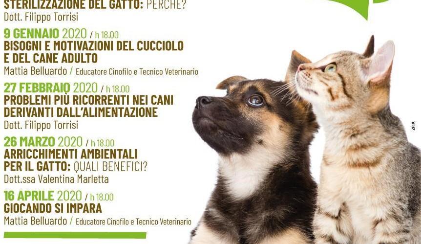 sito di incontri per gatti