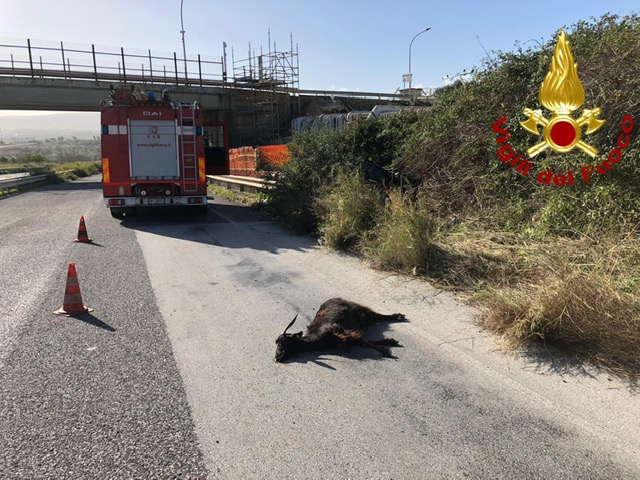 Augusta, auto finisce fuori strada per una capra: ferita un'intera famiglia