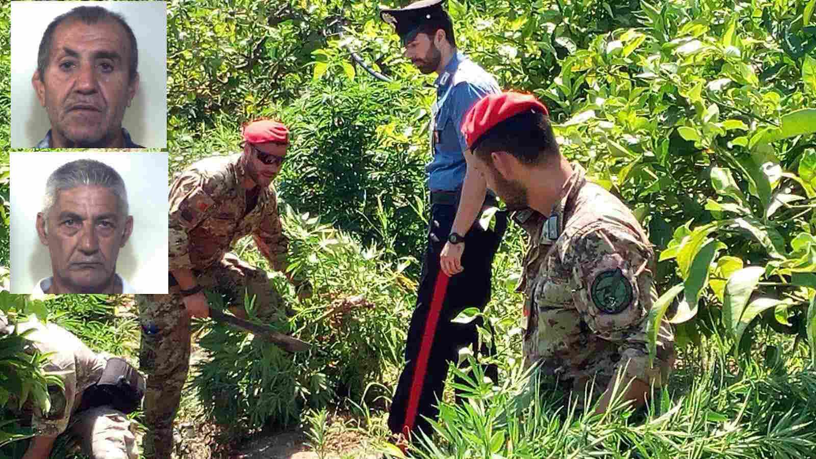 Una coltivazione di marijuana scoperta a Francofonte, due arresti