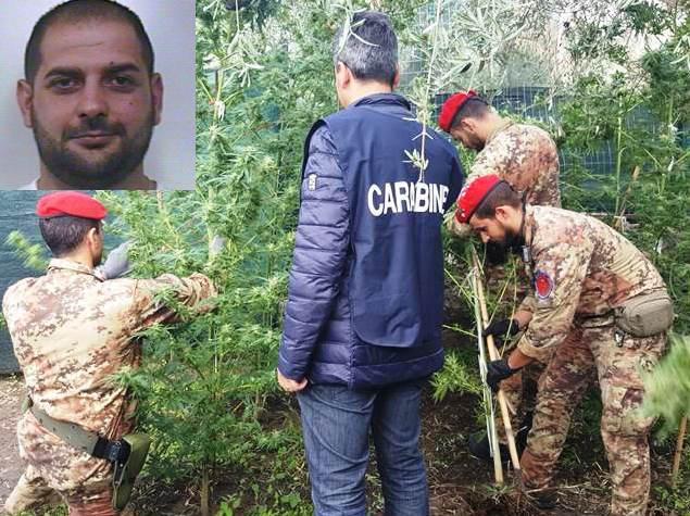 Adrano, scoperta una piantagione di marijuana: un arresto