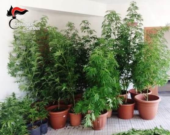 Bronte, nasconde una piantagione di cannabis: arrestato