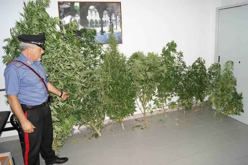 Coltiva marijuana nel giardino di casa, denunciato a Canicattini