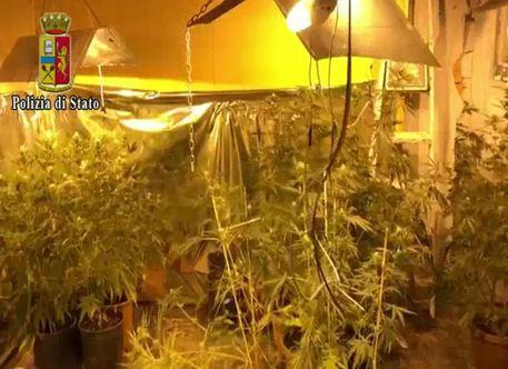 "Catania, nasconde in casa una ""serra"" di marijuana: arrestato"