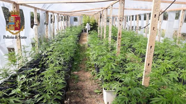 Piantagione di cannabis scoperta a Partinico, 27enne arrestato