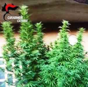 Fiumefreddo, i carabinieri sequestrano due piante di cannabis