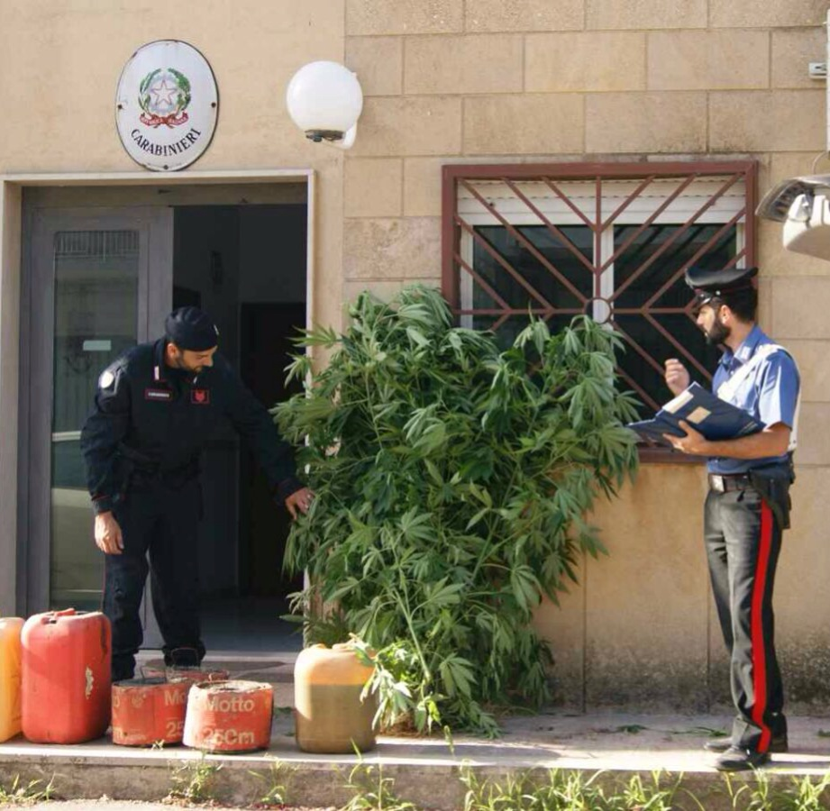 Sortino, un arresto per coltivazione di marijuana