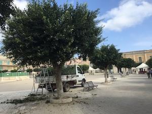 Pachino, iniziata la potatura degli alberi nel territorio comunale
