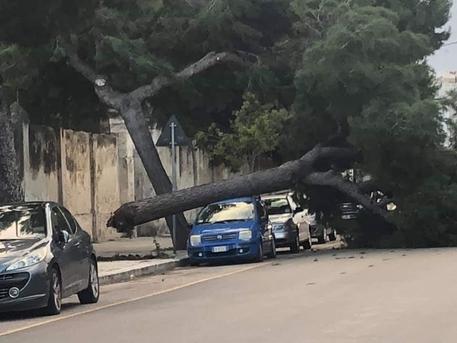 Maltempo, il vento abbatte un pino secolare a Bari: finisce su un'auto