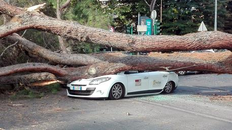 Roma, pino crolla su tre auto in transito: ferito un uomo