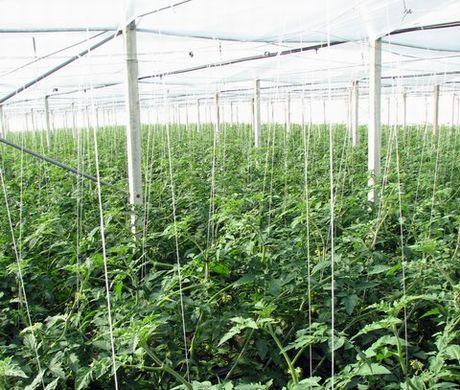 Pachino, giovane denunciato per coltivazione di marijuana