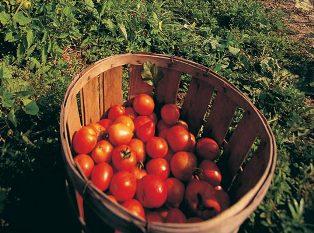 Stato di crisi per agrumi e pomodori, delibera in giunta della Regione