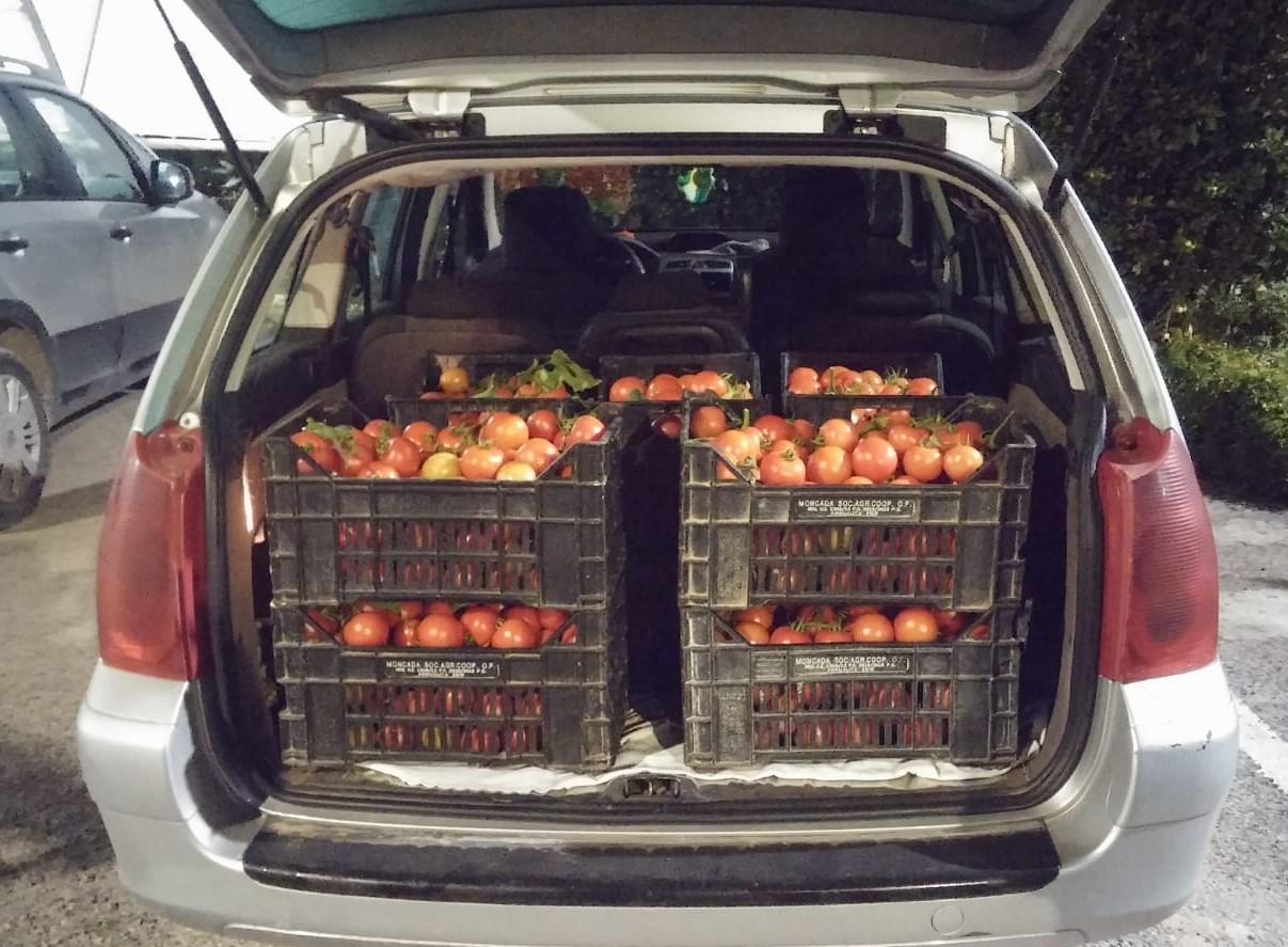 Ispica, aveva rubato 180 chili di pomodori: arrestato dai carabinieri