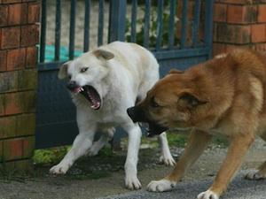 Lotta al randagismo a Noto, sterilizzati più di duecento cani