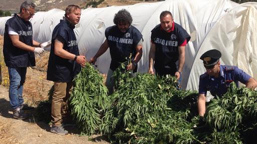 Coltivava cannabis a Riesi, obbligo di firma per un  31enne