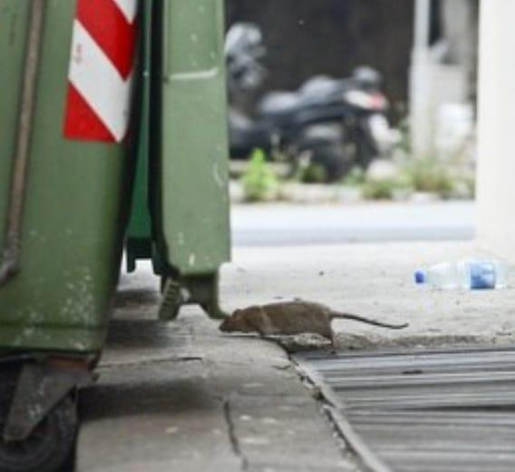 """Siracusa invasa da topi e rifiuti, l'amministrazione intervenga"""