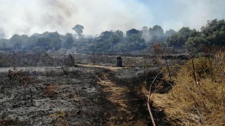 Incendio vicino al campo sportivo di San Gregorio: fuoco nella Riserva