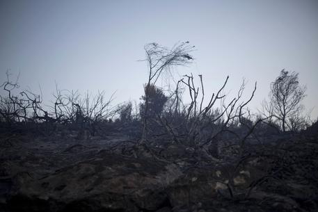 Tenta di spegnere il rogo, morto un pensionato in provincia di Vibo