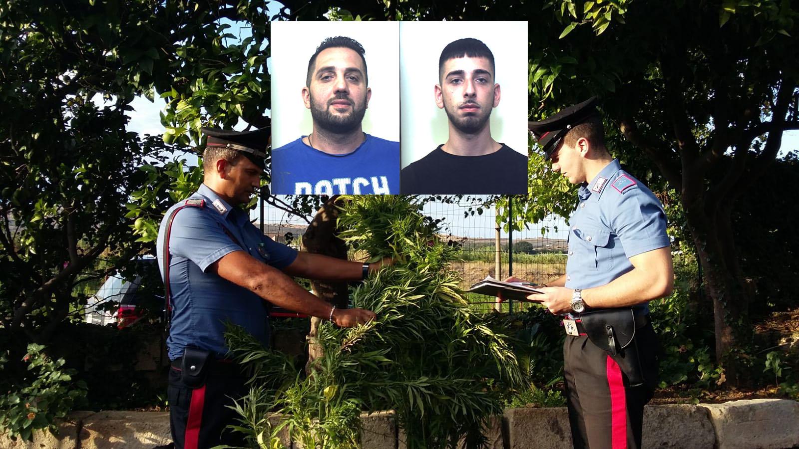 Sorpresi a rubare cannabis a Carlentini: arrestati due lentinesi