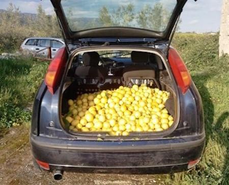 Avola, ruba 400 chili di limoni: una denuncia