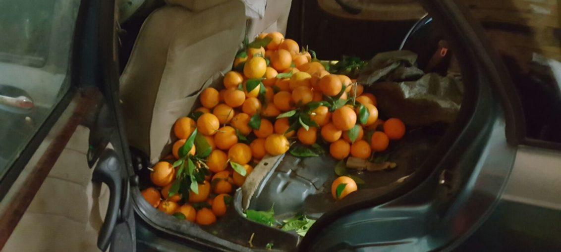 Rubarono agrumi a Scordia, incastrati e denunciati tre lentinesi