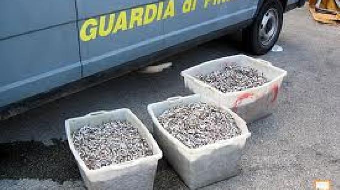 La Finanza di Cosenza sequestra sulla fascia Jonica 1000 chili di novellame di sarda