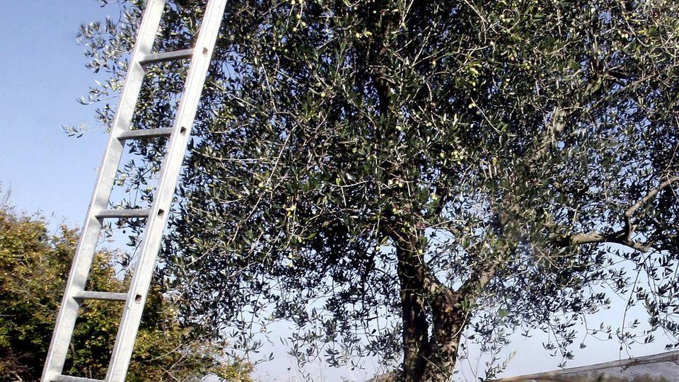 Cade dalla scala in campagna, morto a Novara di Sicilia