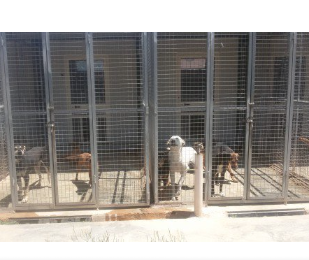 Palermo, esposto del M5S su gestione canile municipale: