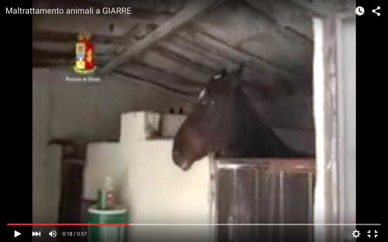 Giarre, cavalli e animali in pessimo stato: tre denunciati (VIDEO)