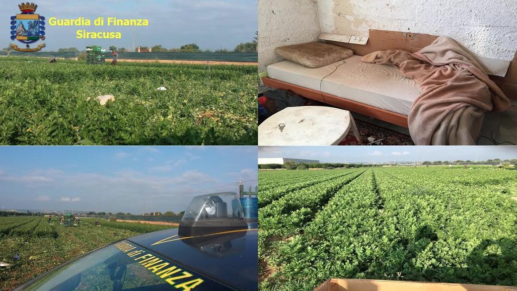Siracusa, denunciato titolare di un'azienda agricola: vendeva ortaggi contaminati