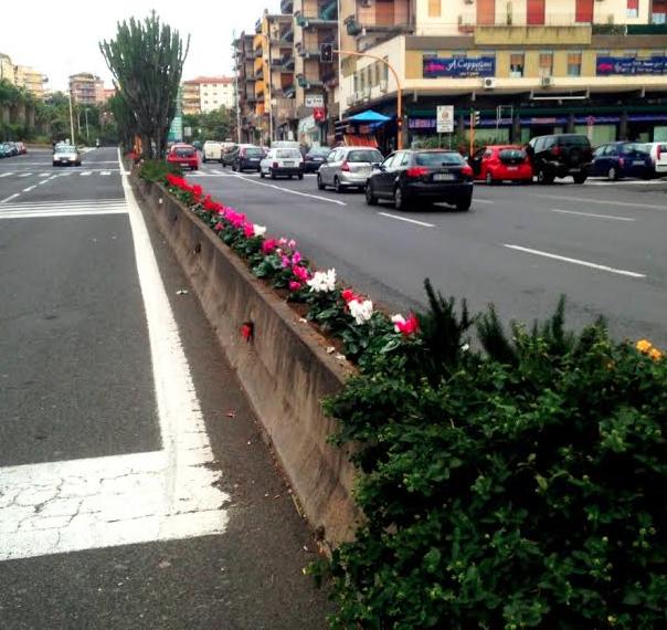 Catania, manutenzioni: disposte piantine nelle aiuole spartitraffico di via Giuffrida